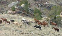 broodmare band Western Photography, Western Art, Westerns, Horses, Mountains, Band, Lifestyle, Sash, Horse