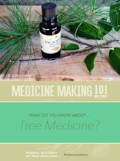 Fun mini quiz -- Test your herbal knowledge! How much do you know about tree medicine? #thinkuknowherbs