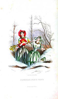 Primrose and snowdrops