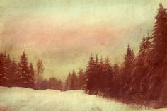 ARTFINDER: Snow tracks home by Nadia  Attura - Nordic pine forest, making our tracks home through the snow in the twilight  Limited edition print, professionally hand printed on Fine Art Giclee Canson B...