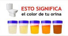 El Color De la Orina Dice Todo Sobre TU Salud ¡ESTO Es Lo Que Significa Su Color y Que Podría Andar Mal En Tu Cuerpo!