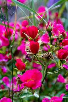 pink meadow wildflowers by Jessica Spath