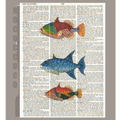 Exotic FISHES ARTWORK printed on Repurposed by RococcoCo, $9.95
