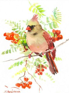 Female Cardinal Bird 12 X 9 in original watercolor by ORIGINALONLY