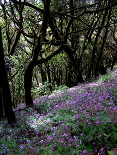 Garajonay National Park | Yoga Retreats La Gomera www.yogagomera.com