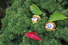Zabawy z kasztanami - nasz ogród ma oczy, by Elżbieta Olszewska <3
