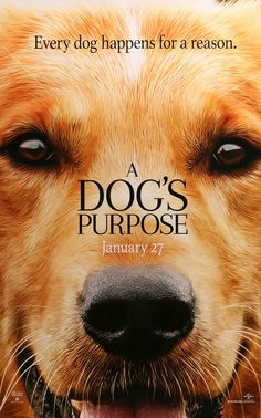 """Film: A Dog's Purpose (2017) Year poster printed: 2016 Country: USA Size: 27""""x 40"""" This is an original, one-sheet teaser poster from 2016 for A Dog's Purpose starring Britt Robertson, Dennis Quaid, Jo"""