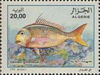 [Fish, type AKM]