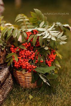 Stories - Рябиновая осень - Детский и семейный фотограф Мария Ковалевская…