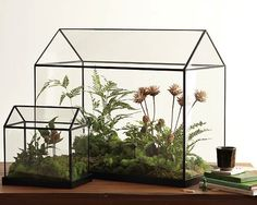 glass greenhouse from west elm