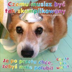 "Polubienia: 615, komentarze: 8 – 🌈 na poprawe humoru 🌈 (@teczowe.pieeski) na Instagramie: ""😠😠😠 #teczowepieski #pieski . . . . . . #cutedogs #cute #dogsofinstagram #newaccount #lfl #new…"" Sweet Memes, Cute Memes, Wholesome Memes, Reaction Pictures, Aesthetic Girl, Cute Dogs, Cool Pictures, Corgi, Lol"
