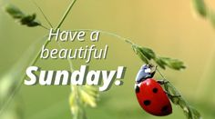 Whether you're feeling that weekend joy and want to have a laugh or if you consider yourself lucky for a peaceful Sunday morning, that's a collection to share. Have A Beautiful Sunday, Beautiful Day, Days Of Week, Sunday Quotes, Good Morning Wishes, Have A Laugh, Happy Sunday, Positive Thoughts, Believe In You