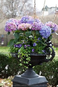 Spring Container Garden ~ Blue & pink hydrangeas, purple pansies, ivy & pussy willow in a black cast iron urn. Hortensia Hydrangea, Pink Hydrangea, Hydrangeas, Container Plants, Container Gardening, Flower Containers, Beautiful Gardens, Beautiful Flowers, Color Lavanda