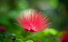 Rare looking flower.