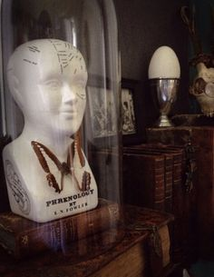 Phrenology Head - Cabinet of Curiosities
