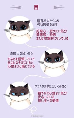 Cat Training cat infographic collection - Are you more interested in having a cat as pet just like most of people in the world? If yes, then this cat infographic collection will be pretty handy for you. I Love Cats, Crazy Cats, Cute Cats, Adorable Kittens, Cat Hacks, Cat Info, Kitten Care, Photo Chat, Cat Care Tips