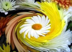Daisies .... He loves me, He loves me not