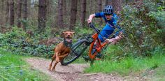 Video :: Trail Dogs