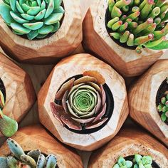Love these wood carved planters for succulents. Green Plants, Air Plants, Indoor Plants, Plants Are Friends, Wooden Planters, Wooden Containers, Cactus Y Suculentas, Unique Flowers, Flower Planters