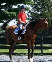 Bermuda is an adoptable Standardbred Horse in Wallingford, KY. Ex- Rutgers University mounted patrol horse needs a new home. Bermuda has both English and Western experience. Large horse for trails or ...
