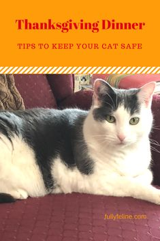 Keeping your cat saf