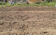 Preparing allotment for seeding, sowing and veg'ing  . .
