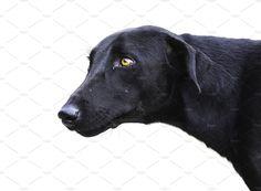 Black Dog by Kailash Kumar on Indian Animals, Black Indians, Animal 2, Dogs, Collection, Doggies, Dog