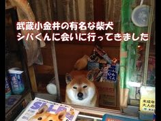 Shiba shopkeeper at newstand in Japan slides open door to greet customers.