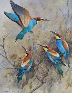 Bee Eaters by Basil Ede (b.1931)