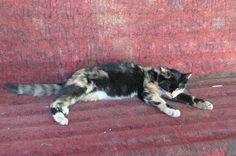 sleeping meow meow @ tibet