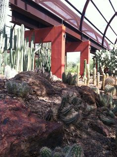 Fall afternoon in the Cactus Gallery located of of Desert Discovery Loop Trail.