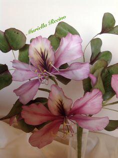 Bauhinia flower past