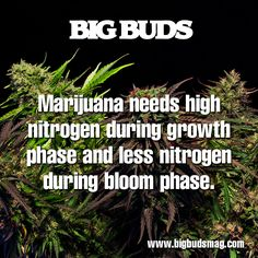 Hydroponics For Marijuana: Change Happens http://bigbudsmag.com/grow/article/hydroponics-marijuana-change-happens-january-2014