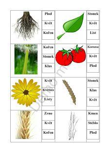 Školní hrátky: července 2011 Elementary Science, Montessori, Planting Flowers, Homeschool, Learning, Nature, Charlotte, Plant, Autism
