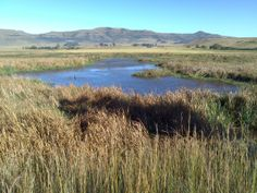 Wakkerstroom town, wetland and bird sanctuary Married Life, Great Places, South Africa, River, Bird, Mountains, Landscape, Outdoor, Outdoors
