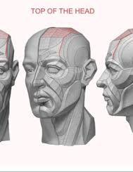 Resultado de imagen para Anatomía