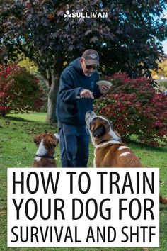Training your dog for emergencies and SHTF is critical unless you want to have an extra problem on your hands in the worst of times. #survival #SHTF #dogs #dogtraining Emergency Preparedness Food Storage, Emergency Preparation, Disaster Preparedness, Survival Blog, Survival Skills, Survival Stuff, First Aid For Kids, Family Emergency, Apocalypse Survival