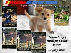 Buy our DVD's http://masterdog-training.com/shop/