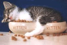 CATS and KITTENS - Funny Cat Pictures -- Cute Cat Pictures