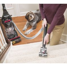 Pinning For Pets On Pinterest Denver Hand Vacuum And