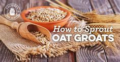 How To Sprout Oat Groats