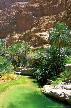 Oman, Sharqiya, The green waters of Wadi Shab near the village of Tiwi are a popular place for day visitors from Muscat