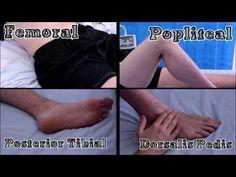 HippocraTV: Pulses of the Lower Limb - YouTube