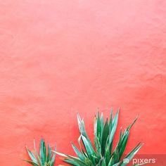 Plants on pink concept. Aloe on pink background wall. Minimal art Wall Mural ✓ Easy Installation ✓ 365 Days to Return ✓ Browse other patterns from this collection! Cute Summer Backgrounds, Weed Backgrounds, Plant Aesthetic, Spring Aesthetic, Mexico Pictures, Green Pictures, Bright Art, Pink Plant, Design Basics