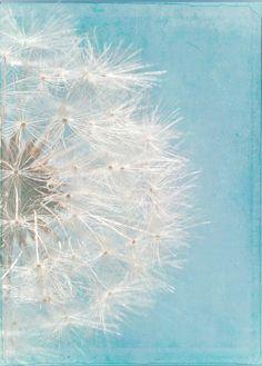WISH Photograph Dandelion Cottage Decor Shabby Chic Art Print Nursery