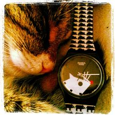 #Swatch   CAT&MOUSE