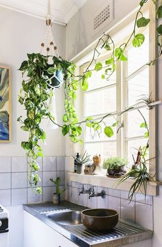 Hanging ivy.                                Urban Jungle | Spell Designs Blog Hanging Plants, Potted Plants, Indoor Plants, Indoor Garden, Outdoor Gardens, Indoor Outdoor, Kitchen Tips, New Kitchen, Seattle Apartment