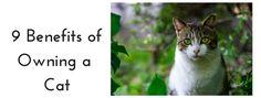 9 Benefits of Owning a Cat brendamueller.com