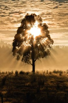 ~~Lady Luck and the Magic Moment ~ sun lights up a tree in the perfect moment, Tasmania, Australia by Mel Sinclair~~ Image Nature, All Nature, Beautiful World, Beautiful Images, Pretty Pictures, Cool Photos, Pictures Of The Sun, Terre Nature, Nature Sauvage