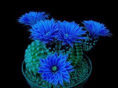 ★ Brilliant Blue ★ TARDE BOA AMIZADES<<A TODOS>> CLAUDIO ESPINDOLA<<<<16-03-2015>>>> GOOD AFTERNOON TO ALL MY FRIENDS>>>>>.